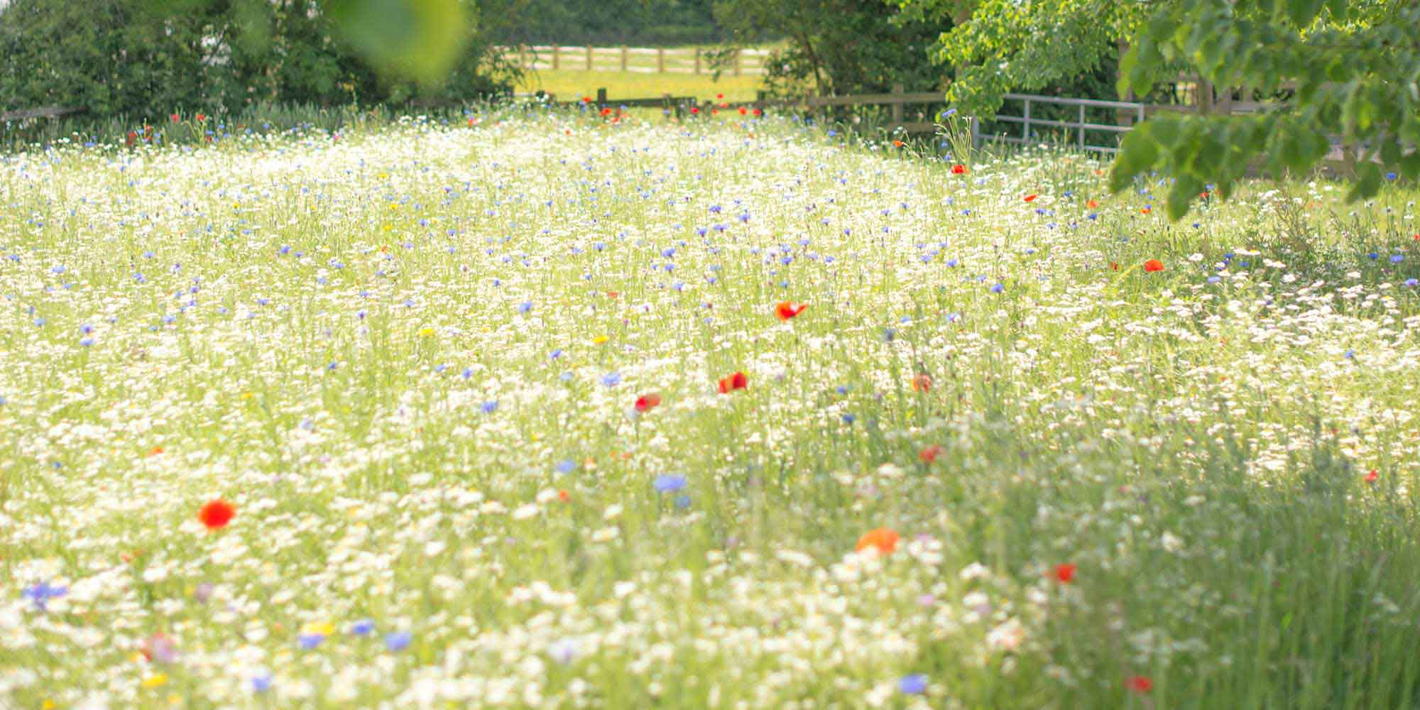 wild flower meadow, Chiddingstone, Kent, country wedding